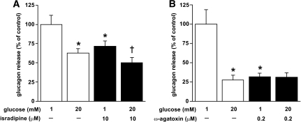 Effects of Ca2+-channel antagonists on glucagon secretion. A: Glucagon secretion measured in the absence (open bars) and presence (filled bars) of 10 μmol/l isradipine. *P < 0.01 versus 1 mmol/l glucose alone, †P < 0.05 versus 1 mmol/l glucose and 10 μmol/l isradipine. 100% = 10.5 ± 0.6 pg/islet/h (n = 9; 3 donors). B: Same as in A but effects of 200 nmol/l ω-agatoxin were tested. *P < 0.01 versus 1 mmol/l glucose alone, 100% = 21.1 ± 3.7 pg/islet/h (n = 9; 3 donors).