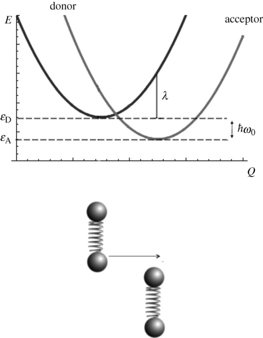 The configuration coordinate diagram to describe events in olfaction is shown. Electron tunnelling from the donor /D〉 to acceptor /A〉 is facilitated by the excitation of an appropriate odorant phonon corresponding to  The change in force as the electron transfers is characterized by the shift in energy, down the vertical axes E, and displacement, along the reaction coordinate Q, that is phonon assisted. The reaction coordinate describes the displacements of nuclear modes that entail the reaction pathway.