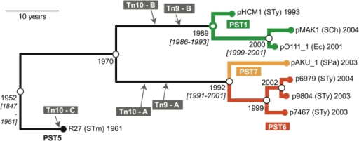Phylogenetic tree for IncHI1 plasmid sequences.Phylogenetic tree based on 347 SNPs identified among 8 publicly available IncHI1 plasmid sequences (Table 2), constructed using BEAST (with 20 million iterations, 4 replicate runs, exponential clock model). Terminal nodes are labelled with the organism of origin (STy  =  Salmonella enterica serovar Typhi, SCh  =  Salmonella enterica serovar Choleraesuis, STm  =  Salmonella enterica serovar Typhimurium, SPa  =  Salmonella enterica serovar Paratyphi A, Ec  =  E. coli O111:H-) and date of isolation. Isolation dates were input into the BEAST model in order to estimate divergence dates for internal nodes (open circles, labelled with divergence date estimates; brackets indicate 95% highest posterior density interval). Insertion sites (grey) are based on sequence data and verified (except for pO111_1 and pMAK1) by PCR. Precise insertion sites and PCR primers for verification are given in Tables 3 & 4. Four major plasmid groups, PST1, PST5, PST6, PST7, are coloured as labelled.