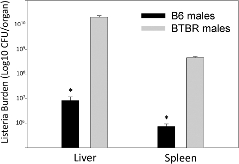 Listeria monocytogenes (LM) burden of infected mice.BTBR and B6 mice were assessed for LM (cfu/organ) in liver and spleen at threes days after infection; * indicates a significant difference between the two strains.