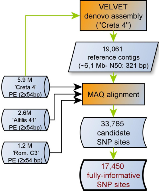 tag derived simple sequence repeat markers of olive Sequence tag, with particular interest in those sequences expressed  dna- based molecular markers in olive studies  issrs (inter simple sequence  repeats)  populations (subsp europaea) have mostly derived from.