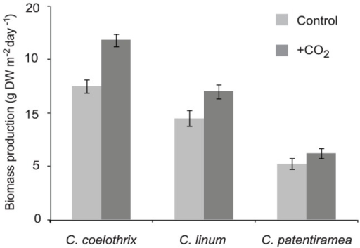Biomass productivity in response to CO2 enrichment for C. coelothrix, C. patentiramea and C. linum.Data show mean biomass productivity (±1 SE) for each CO2 level*species (n = 3).