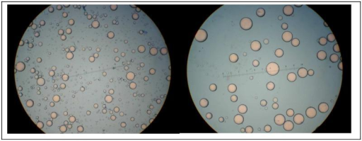 Fat cell separation by size. Representative photographs of thigh adipocytes isolated from the same individual after their separation into different size populations. The left panel shows a photograph of the small adipocytes (average size 0.16 μg lipid/cell) and the right panel shows a photograph of the large adipocytes (average size 0.75 μg lipid/cell).