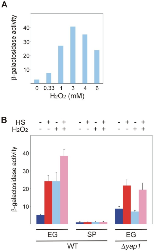 Hsf1 response to oxidative stress is lost in stationary-phase yeast and depends on Yap1.(A) Wild-type BY4741 cells harboring the HSE2-LacZ plasmid grown exponentially at 30°C were incubated for 30 min with the indicated concentrations of H2O2. (B) Wild-type and Δyap1 BY4741 cells harboring the HSE2-LacZ plasmid grown at 30°C either exponentially (EG) or to stationary-phase (SP) were incubated for 30 min with (+) or without (−) H2O2 (3 mM) prior to heat shock. Cells were either incubated further for 20 min at 30°C (−) or subjected to a 20 min to heat shock (HS) at 42°C (+). Hsf1 activity was measured as β-galactosidase specific activity. The data are the mean plus standard error of at least 3 independent experiments. Kruskal-Wallis one way analysis of variance on ranks (pairwise multiple comparison with Tukey test) applied on data of EG cells in (B) indicates a statistically significant difference (p<0.001) between the activity in untreated cells and in cells exposed to HS or H2O2.