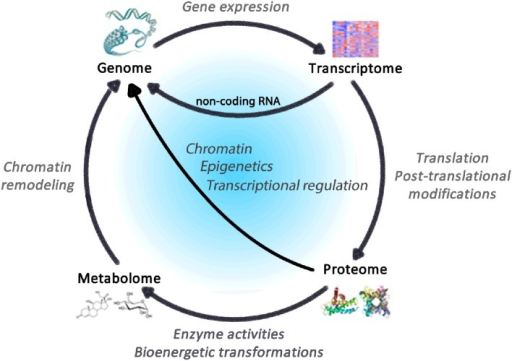 Regulatory cycle linking the omics of life the genome open i regulatory cycle linking the omics of life the genome comprises the totality of genes within malvernweather Gallery
