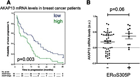 AKAP13 mRNA levels, survival and ERαS305P. a AKAP13 expression levels were analyzed and correlated with progression-free survival of a cohort of breast cancer patients treated for metastatic disease. b Tumors were stratified on the basis of ERαS305P positivity, the AKAP13 mRNA levels of each sample were analyzed. A Student's T-test was performed; p = 0.06