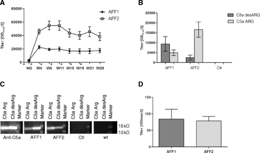 C5a-peptide vaccines induce target-specific antibody response in Tg2576 mice. a Tg2576 mice were immunized with AFF1- (n = 12) and AFF2- (n = 13) containing vaccines 4 times in biweekly intervals (week 0, 2, 4, and 6) followed by 3 boosts in a monthly interval (week 11, 15, and 19). The immunizations are indicated by an asterisk. Plasma samples were collected at the indicated time points (week 2–28). All samples were analyzed by ELISA and the mean IgG antibody titers (ODmax/2) against the injected peptide AFF1 and AFF2 are presented. b The titers against both forms of the target protein, C5a desARG and C5a ARG, were analyzed in the plasma obtained after the last immunization in W28. Also control immunized mice (n = 11) were tested against C5a proteins (c). Western blot analyses where recombinant C5a ARG and C5a desARG were loaded and detected by AFF1 (second panel), AFF2 induced immune plasma (third panel), as well as plasma obtained from control immunized mice (fourth panel), and untreated wt mice (fifth panel) as a negative control. Rabbit anti-mouse C5a antibody was used as a positive control (first panel). The Precision Plus Protein™ Dual Color Standards (Bio-Rad) was used as a marker. d CSF was obtained from five randomly selected AFF1 and AFF2 immunized mice and tested for AFFITOPE®-specific antibodies in week 28. All data points represent the group means ± SEM of n animals
