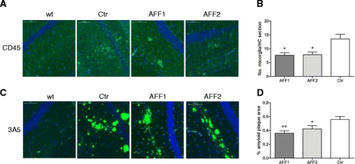 At an early stage of disease, C5a-peptide vaccines reduce the number of activated microglia and amyloid plaque load in the brain. a Brain sections of 15-month-old Tg2576 mice immunized with either AFF1 (n = 23), AFF2 (n = 23), or control (n = 14) vaccines were stained for CD45-positive microglia cells (green). b The average number of CD45high cells in the hippocampal region of all sections. c Amyloid plaques visualized by the 3A5 mAB (green) (d). Percentage of amyloid area of the total brain sections all containing the hippocampal region was calculated by the eDefiniens Software. a, c Cell nuclei were stained with DAPI (blue) and the scale bar refers to 100 μm. b, dBars represent the group means ± SEM of n animals. The p value was determined using one-way ANOVA test followed by a Dunn's multiple comparison Test (non-parametric test) and expressed as *p < 0.05 and **p < 0.01