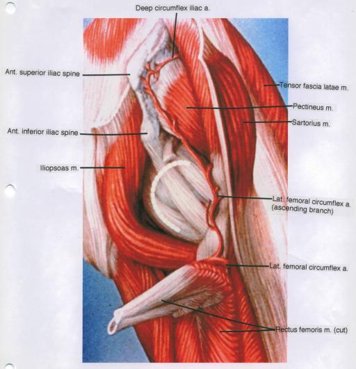 anterior superior iliac spine; anterior inferior iliac   Open-i