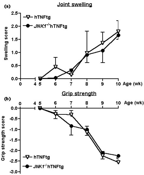 Clinical course of arthritis in human tumour necrosis factor transgenic (hTNFtg) and JNK1-/-hTNFtg mice. Joint swelling (a) and grip strength (b) were assessed. No statistically significant differences between the two groups were detected. Vertical bars indicate standard deviation. Control animals (wild-type and JNK1-/-) showed no signs of arthritis (not shown). JNK, c-Jun N-terminal kinase.