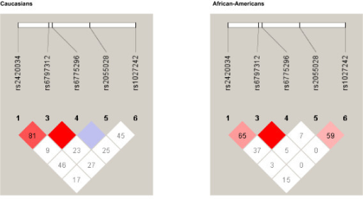 Haplotype block structure among Caucasians and African-Americans.