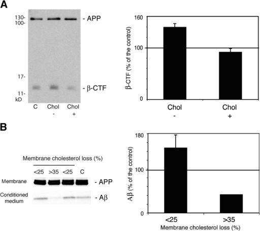 Moderate membrane cholesterol reduction in vitro enhances APP-β-cleavage and Aβ production. (A) 10 d in vitro hippocampal neurons were not treated (C) or treated as indicated in Materials and methods to lower the membrane cholesterol up to 30% (Chol−). Cholesterol was added back to some of the treated cells for 15 min (Chol+) as cholesterol–MCD inclusion complexes. The amount of total APP and APP-β-CTF fragment in the different cell extracts was determined by Western blot. Densitometry of the β-CTF fragment normalized to the amount of total APP revealed a significant 39% increase in low cholesterol neurons with respect to untreated neurons. This effect was reverted by cholesterol replenishment. Thus, a 15-min treatment with the cholesterol inclusion complexes results in the production of similar amount of β-CTF fragment than control neurons (91% of control). Data shown in the graph are means and SDs from three different experiments. (B) Crude membrane pellets and conditioned media of control or low membrane cholesterol CHO-7w cells (stably expressing human APP) were submitted to PAGE-SDS in 10% Bis-Tris NuPage gels. Western blot detection was performed with an anti-APP COOH-terminal antibody to visualize holo-APP and with anti-APP mAb (WO2) to detect the amyloid peptide. Aβ peptide production was increased in cases of moderate low cholesterol an average of 47% over the control (lanes 1 and 3 in the blot and <25% bar in the graph, n = 6). Confirming previous data from other groups, extensive cholesterol loss over 35% leads to a strong decrease in Aβ production (lane 2 in the blot and >35% bar in the graph, n = 2).