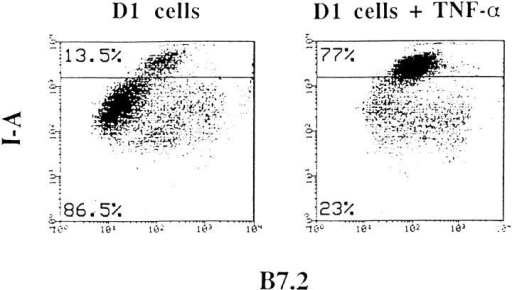 Dot plot double-color FACS® analysis of MHC class II and  B7.2 molecules of D1 bulk culture.