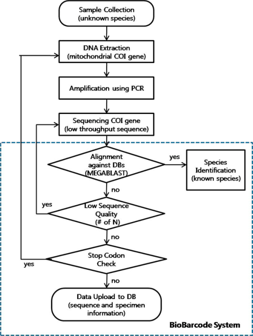 Flowchart of BioBarcode DNA sequence identification and | Open-i