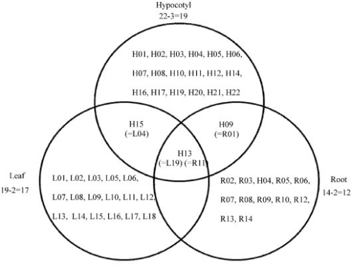 Venn diagram analysis showing up or down regulated pro open i venn diagram analysis showing up or down regulated proteins that overlapped between the leaf ccuart Gallery