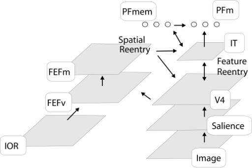 Model for visual attention. First, information about the content and its							low level stimulus-driven salience is extracted. (Stimulus-driven							saliency, however, will not be crucial for the results obtained here.)							This information is sent further downstream to V4 and to IT cells which							are broadly tuned to location. A target template is encoded in PF memory							(PFmem) cells. Feedback from PFmem to IT increases the strength of all							features in IT matching the template. Feedback from IT to V4 sends the							information about the target downwards to cells with a higher spatial							tuning. FEF visuomovement (FEFv) cells combine the feature information							across all dimensions and indicate salient or relevant locations in the							scene. The FEF movement (FEFm) cells compete for the target location of							the next eye movement. The activity of the FEF movement cells is also							sent to V4 and IT for gain modulation. However, in all simulations we							set the model to fixate, which results in a suppression of the FEF							movement activity. The IOR map is not used for the experiments simulated							here.