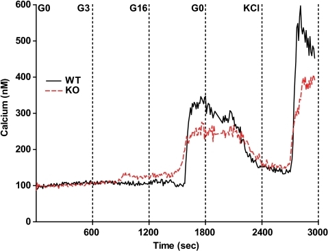 Abnormal calcium response to glucose stimulation in PANDER−/− islets. Intracellular calcium concentration was determined via fura-2 fluorescence imaging during a glucose perifusion on isolated PANDER−/− and WT islets with stimulation from a glucose ramp and KCl (n = 3). Time of glucose increase is shown above and on the x-axis. Representative calcium plots are shown. Values are means ± SE.
