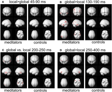 Source reconstruction. Areas showing a significant target level effect, p < 0.05, FWE-corrected for meditators and controls separately. The analysis per group further validates the interaction effects observed in Figure 9, as the global vs. local effects are mostly found in the meditator group.