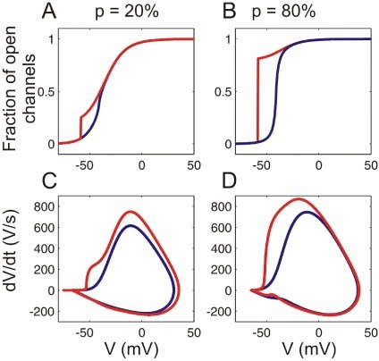 Channel activation and AP dynamics in models with cooperative sodium channels.(A,B) Activation curves of sodium channels and (C.D) AP phase plots for the models with a small () and a large () fraction of cooperative channels, and a weak coupling (, blue traces) or strong coupling (, red traces).