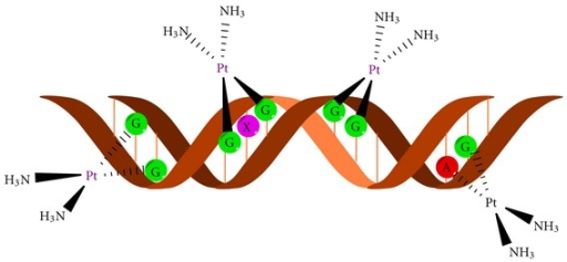 DNA adduct formation with cisplatin moiety.