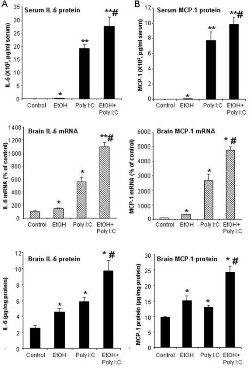 Effect of chronic ethanol treatment on poly I:C-induced blood and brain IL-6 and MCP-1. As described in the methods, male C57BL/6 mice were treated intragastrically with ethanol (5 g/kg, i.g. daily for 10 days) and 24 hours after the last dose of ethanol treatment injected intraperitoneally with poly I:C (250 μg/kg) plus D-GalN (20 mg/kg). Brains were collected three hours after poly I:C injection for all groups, that is, ethanol alone is 27 hours after the last dose of ethanol. (A) Ethanol or poly I:C alone treatment increased serum IL-6 protein and brain IL-6 mRNA and protein. Sequential ethanol-poly I:C treatment significantly augmented the blood and brain levels of IL-6. (B) Ethanol or poly I:C alone treatment increased serum MCP-1 protein and brain MCP-1 mRNA and protein. Ethanol pretreatment potentiated poly I:C-induced serum MCP-1 protein and brain MCP-1 gene expression and protein synthesis. The results are the means ± SEM in two independent experiments with seven animals per group. *P <0.05, **P <0.01, compared with the vehicle control group. #P <0.05, compared with the corresponding poly I:C treated group.