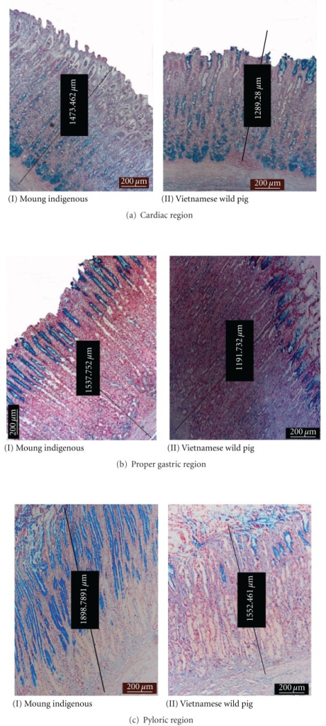 Photomicrograph of AB staining showing different affinity of positive areas at various sites.
