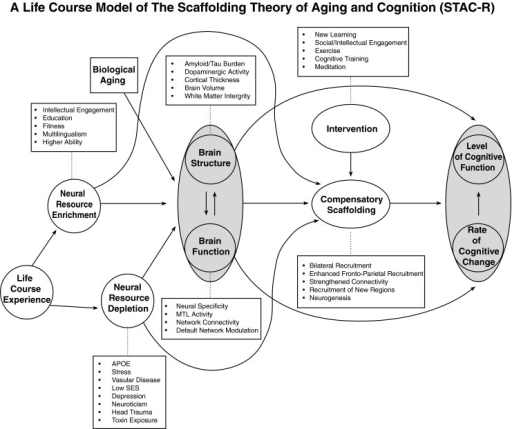 A conceptual model of the scaffolding theory of aging and cognition-revised (STAC-r)