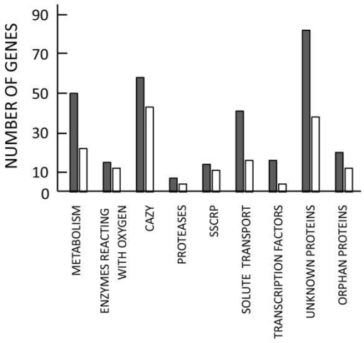 Number of genes, grouped according to functional similarity, that were induced by sophorose at least fourfold (grey bars) and genes whose sophorose induction was significantly lower (> 5-fold) in the Δkap8 strain compared with the complemented transformant Δkap8ct (white bars). The grouping shown comprised 81.7% of all sophorose-inducible genes of strain Δkap8ct as documented in Supporting Information Table S4. Gene groups and abbreviations: METABOLISM, genes involved in intracellular catabolism, anabolism and secondary metabolism; CAZY, all extracellular glycosyl hydrolases, carbohydrate esterases and accessory enzymes; ENZYMES REACTING WITH OXYGEN, oxidases, cytochrome P450- and FAD monooxygenases, dioxygenases; SSCRP, small, secreted, cysteine-rich proteins including hydrophobins and ceratoplatanins; SOLUTE TRANSPORT, members of the major facilitator superfamily; amino acid transport; ion transport; UNKNOWN PROTEINS, proteins that have orthologs in other species, but for which no function has as yet been described; and ORPHAN PROTEINS, proteins that have orthologs, if at all, only in other Trichoderma species, and for which also no function is as yet known.