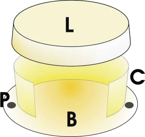 Schematic representation of the isolation chamber. It is comprised by a base plate (B) (diameter: 15 mm), under a cylindrical shell (height 6 mm × diameter 12 mm) (C) and an upper lid (L) (height: 2 mm × diameter: 14 mm). At the sides there are perforations for fixation of the chamber on the fascia of the medial musculature of the medial thigh.