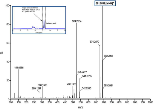 Mass spectrum of major product generated from reaction catalysed by holo-module 5 supplemented with ATP, L-pHPG and L-pHPG-L-Arg-D-pHPG-L-Ser-S-PCP4 (2)The major product observed from the reaction containing L-pHPG-L-Arg-D-pHPG-L-Ser-S-PCP4 (2), holo-module 5, ATP and L-pHPG was isolated over multiple injections by HPLC (peak isolated indicated in inset HPLC trace) and then characterized by HRMS (ESI+). The exact mass ion corresponding to the M+H ion of pro-nocardicin G was observed. Exact mass calculated for pro-nocardicin G: C33H39N8O9: 691.2835; Found: 691.2839 [M+H]+.