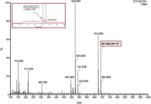 Mass spectrum of major product generated from reaction catalysed by holo-module 5 and L-pHPG-L-Arg-D-pHPG-dehydroalanyl-S-PCP4 (7) supplemented with ATP and L-pHPGThe major product from the reaction containing L-pHPG-L-Arg-D-pHPG-dehydroalanyl-S-PCP4 (7) was isolated over multiple injections by HPLC (peak indicated in inset HPLC trace) and then determined by HRMS (ESI+). The exact mass ion corresponding to the M+H ion of pro-nocardicin G was observed. Exact mass calculated for C33H39N8O9: 691.2835; Found: 691.2822 [M+H]+.