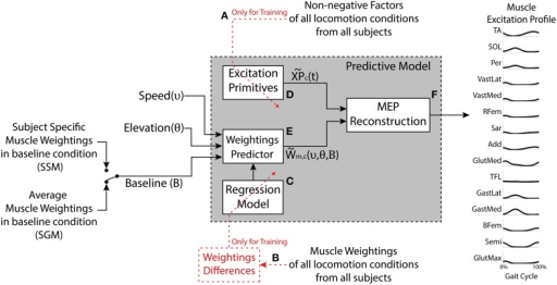 The model has three inputs: The desired speed, the desired elevation, and the set of muscle weightings characterizing the baseline condition (elevation 0% and speed 3 km/h). The outputs are predicted motor components (weightings and excitation primitives) as well as the synthetic muscle excitation profiles (MEP) for the muscles under study. The generic Excitation Primitive block (D) was determined using the non-negative factors collected experimentally (A). The Regression Model block (C) was determined using experimental muscle weightings (B). The Weightings Predictor block (E) produces the estimated muscle weightings for a given speed and elevation. The MEP Reconstruction block (F) realizes the linear combination of the excitation primitives and the estimated muscle weightings. The model can be applied in two modes, the Subject-Generic Mode (SGM) and the Subject-Specific Mode (SSM), depending whether the input baseline weightings are generic (subject group average) or experimentally obtained for a specific subject.