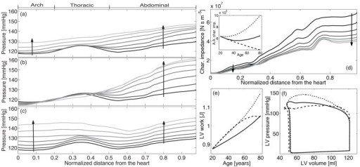 Left: Systolic pressure along the aorta at different ages. From top to down: (a) physiologic ageing, (b) ageing without increase of pulse wave velocity and (c) ageing without plastic geometric remodelling. Distances are normalized to aortic length. From 20 to 80 years of age, with 10 years step. The darker the younger (see arrows). Right: characteristic impedance at different ages along the aorta (the inset shows aortic root values with age)(d), LV work during ageing (e) and LV pressure-volume loops at 80 years old (f) for complete ageing (continuous line) and in the absence of arterial stiffening (dashed line) and remodelling (dotted line).