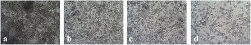Morphology and density of IRE/CTVM19 cell line following IVM treatment. Increasing concentration of IVM (b: 11 μM; c: 22 μM; d: 33 μM) determined larger and more vacuolated cells compared to untreated control (a). Pictures were captured at 100 × magnification