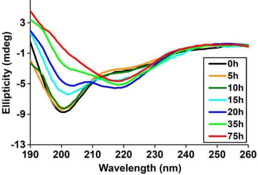 Time-dependent Far UV CD data of h-IAPP.The lag time for h-IAPP to form amyloid under these conditions is on the order of 30 hr. The data show a conformational change from random coil to apparent α-helices that occur during the lag phase, followed by conversion to β-sheet structure in the growth phase.DOI:http://dx.doi.org/10.7554/eLife.12977.010