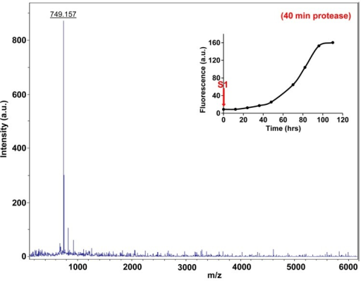 Characterization of h-IAPP time-zero species by forty minute Proteinase K digestion as monitored by MALDI-TOF MS.MALDI-TOF mass spectra of h-IAPP aliquots taken at time-zero directly after initiation of aggregation, after 40 min treatment with Proteinase K. Data show that freshly dissolved h-IAPP are proteolytically degraded. The insert indicates the time point (red arrow, S1) at which the aliquots were removed for Proteinase K treatment, prior to mass spectroscopy analysis.DOI:http://dx.doi.org/10.7554/eLife.12977.036