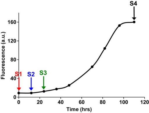 Fluorescence detected thioflavin-T binding assay (black) showing the kinetics of amyloid formation by a solution of h-IAPP used in the proteolytic digestion studies presented in Figure 7—figure supplements 3–14. Arrows indicate time points at which aliquots were removed and subjected to Proteinase K treatment. The time points are denoted as: (red, S1) time-zero, (blue, S2) early lag phase intermediates, (green, S3) mid-lag phase intermediates and (black, S4) saturation phase containing amyloid fibrils.DOI:http://dx.doi.org/10.7554/eLife.12977.027