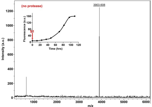 Characterization of h-IAPP time-zero species by MALDI-TOF MS.MALDI-TOF mass spectra of h-IAPP aliquots taken at time-zero directly after initiation of aggregation, in the absence of Proteinase K. Data show the expected molecular weight for h-IAPP (3903 Daltons). The insert indicates the time point (red arrow, S1) at which the aliquots for mass spectroscopy were removed over the course of amyloid formation.DOI:http://dx.doi.org/10.7554/eLife.12977.028