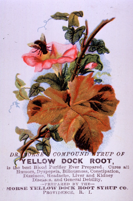 <p>Advertising card for Yellow Dock Root Syrup, a blood purifier, which can be used to cure various ailments and general debility.  Visual motif:  A flowering vine with bee.</p>