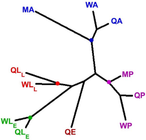 Relationships among V. squamosa life stages based upon EST frequencies. Colored dots indicate where libraries derived from developmentally similar stages cluster. Q, queen; W, worker; M, male; E, egg; LE, early larval instars; LL, late larval instars; P, pupa; A, adult.