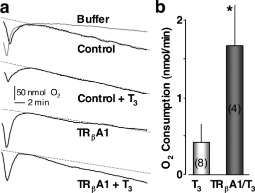 T3 stimulation of oocytes expressing TRβA1 increases O2 consumption. (a) Plots of O2 levels in oocytes as labeled (n = 200 oocytes per group). (b) Histogram represents average change of O2 consumption rates (before and after T3 exposure) in control and xTRβA1 groups. Statistical significance is indicated by the asterisk (*; t test, P < 0.05).