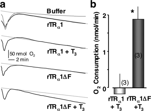 NH2-terminal truncated rat TRα1 (rTRα1ΔF) stimulates O2 consumption. (a) Plots of O2 levels for oocytes expressing full-length rTRα1 with and without T3 compared with oocytes expressing the NH2-terminal truncated rTRα1ΔF with or without T3. Protocols used were identical to those described in Fig. 7. (b) Histogram of the average change of the O2 consumption rates after T3 exposure in rTRα1 versus rTRα1ΔF groups. The asterisk (*) indicates statistical significance (t test, P < 0.05).