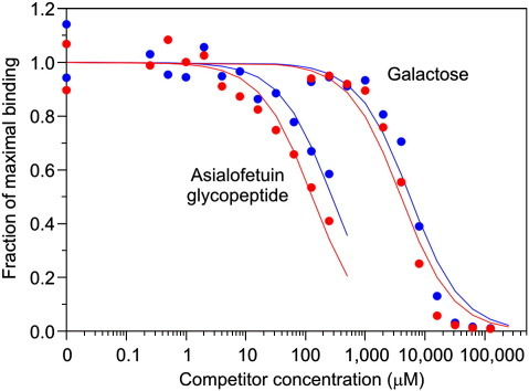 Binding competition assays comparing binding of a tri-antennary glycopeptide to MGL. Binding curves for monomeric CRD are shown in blue and curves for trimeric extracellular domain are shown in red. The KI values obtained from these experiments are summarized in Table 2.