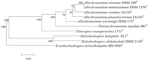 Phylogenetic tree highlighting the position of A. vinosum DSM 180T relative to several other type strains within the Chromatiaceae and Ectothiorhodospiraceae based on 16S rRNA sequence analysis. The tree was built with the RDP Tree Builder and numbers above branches are support values from 100 bootstrap replicates [25]. Bar, 1 nucleotide substitutions per 100 nucleotides.