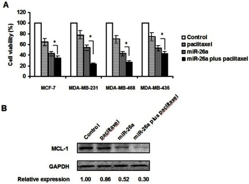 MiR-26a sensitized breast cancer cells to paclitaxel.A. Viability of MDA-MB-231, MCF-7, MDA-MB-435, MDA-MB-468 cells was determined by MTT assay 72 hours after treatment. The percentage of the cell viability as compared with itself without paclitaxel treatment was presented. The concentrations of miR-26a and paclitaxel were 50 µM and 0.12 nM, respectively. B. Western blot assay for MCL-1 expression 48 hours after treatment in MDA-MB-231 cells. *P<0.05.