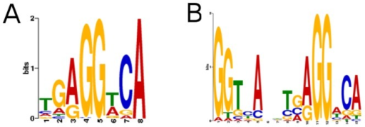Definition of TRE Consensus.A. Consensus sequence with similarity to the classic TRβ binding half-site discovered by analysis of top 150 peaks in BioChIP analysis. B. The previously defined TRβ consensus obtained from analysis of more than 30 published target gene regulatory elements is shown for comparison at right.