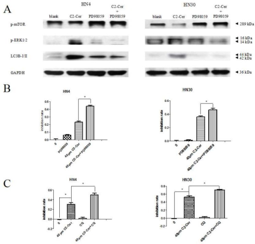 (A) Western blotting. Expression levels of LC3B-II, phospho-mammalian target of rapamycin (p-mTOR) and phospho-extracelluar signal-regulated kinase 1/2 (p-ERK1/2) were analyzed after treatment with PD98059/C2-Cer. LC3B-II and p-ERK1/2 levels declined and p-mTOR levels were elevated compared with cells treated with C2-Cer only; (B) CCK8 assay. Treatment with 10 μM PD98059 significantly reduced the viability of cells exposed to C2-Cer; (C) CCK8 assay. CQ enhanced the growth-inhibition effect of C2-Cer compared with C2-Cer only. (*: p < 0.05).