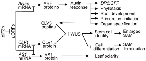Proteins Concept Map.A Concept Map For The Role Of Eif3h In Arabidopsis Sam Open I