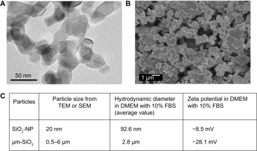 Characterization of SiO2 particles.Notes: (A) TEM analysis of SiO2 nanoparticles, (B) SEM analysis of micrometer SiO2 particles, and (C) particle size, hydrodynamic diameter, and zeta potential.Abbreviations: SEM, scanning electron microscopy; TEM, transmission electron microscopy; DMEM, Dulbecco's Modified Eagle's Medium; FBS, fetal bovine serum; μm-SiO2, micrometer SiO2 particles; NP, nanoparticle.