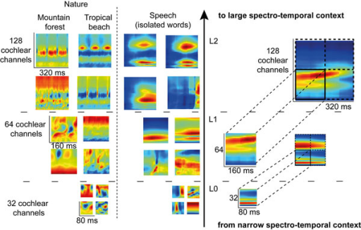 Learned representations illustrated for speech and natural sounds. FastICA training is first done on patches of 80ms x 32 cochlear channels of the envelopes coming from a 128 channels cochleagram (Level L0). Then, patches of 160ms x 64 cochlear channels are created at level L1 with a concatenation through time and space of the learned L0 features. FastICA is then performed on these larger patches to generate the new L1 representations. The same procedure is repeated for level L2.